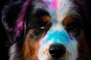 Holi Dogs (1)