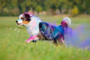 Holi Dogs (4)